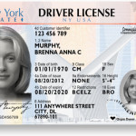 nys driver's license new look